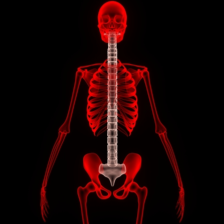 photodune-14342435-human-skeleton-spinal-cord-xs.jpg